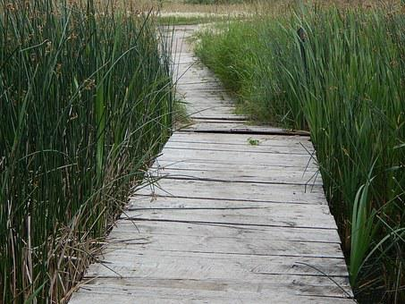 Dock, Wood, Path, Rustic, Grass, Nature, Wooden, Scenic