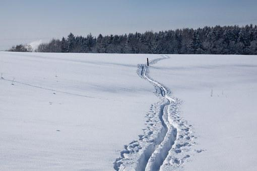 Trace, Cross Country Skiing, Ski Track, Sticks, Snowy