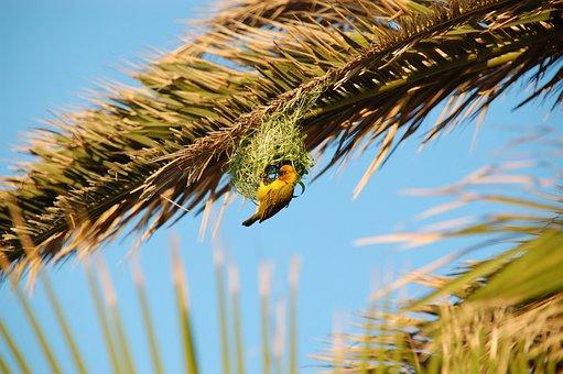 South Africa, Wild, Nature, Wildlife, Animals, Bird
