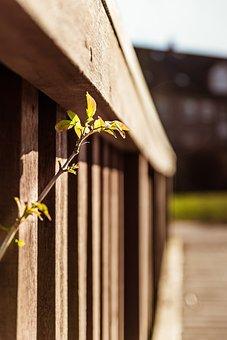 Scion, Railing, Grow, Spring, Progress, Breakthrough