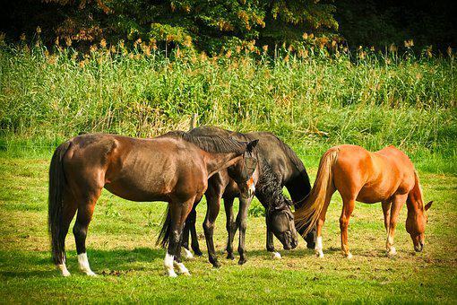 Horses, Animal, Nature, Ride, Farm, Wildlife, Pasture