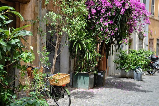 Rome, Italy, Architecture, Tourism, Flowers, Glimpse