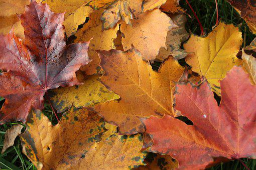 Leaves, Autumn, In The Fall Of, The Tree, Leaf