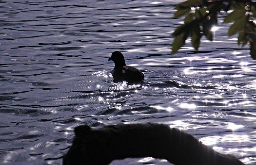 Bird, Water, Backlighting, Root, Leaves, Idyllic, Mood