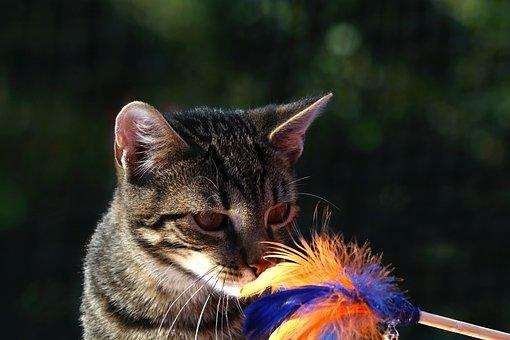 Cat, Animal, Playful, Curious, Play, Mammal, Cute, Head