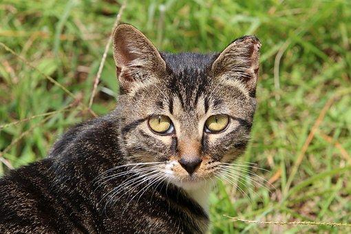 Cat, Street Cat, Gilnyangyi, Kitten, Animal, Cats