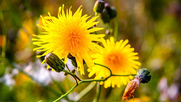 Flowers, Garden, Yellow, Colorful, Bloom, Nature, Plant