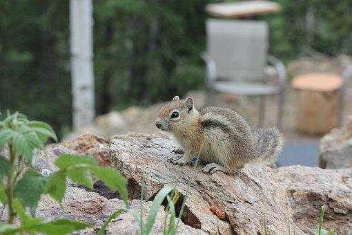 Chipmunk, Cute, Cute Animal, Furry, Fuzzy, Animal