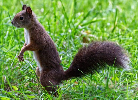 Squirrel, Animal World, Nature, Cute, Animal, Rodent