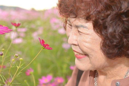 Elderly, Fall Flowers, Cosmos, Oriental, In Autumn