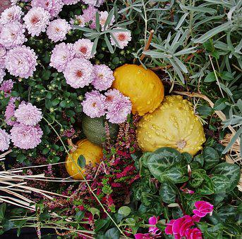 Autumn, Flowers, Arrangement, Floral Arrangement