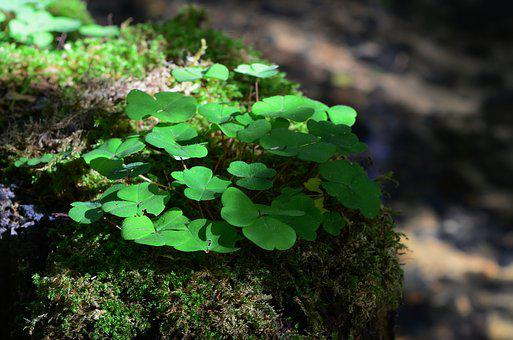 Forest, Moss, Forest Floor, Plant
