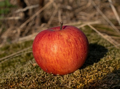 Red Apple, Apple, Ripe, Fruit, Harvest, Autumn, Nature