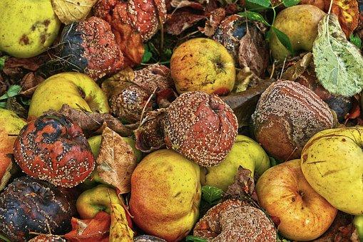 Apple, Windfall, Fruit, Orchard, Fruits, Autumn, Lazy