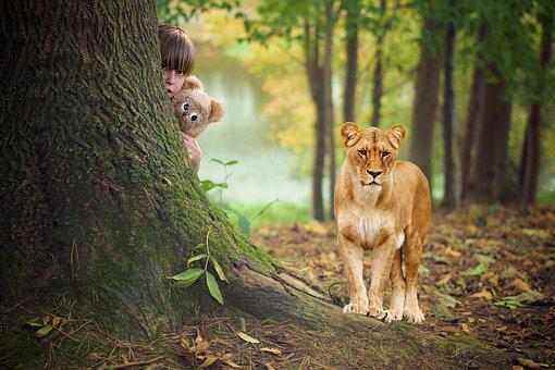 Child, Hide, Tigers, Autumn, Playful, Dream, Gorgeous