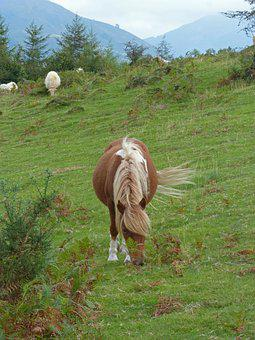 Horse, Pacer, Pastures, Through Browsing, Pasture, Pony