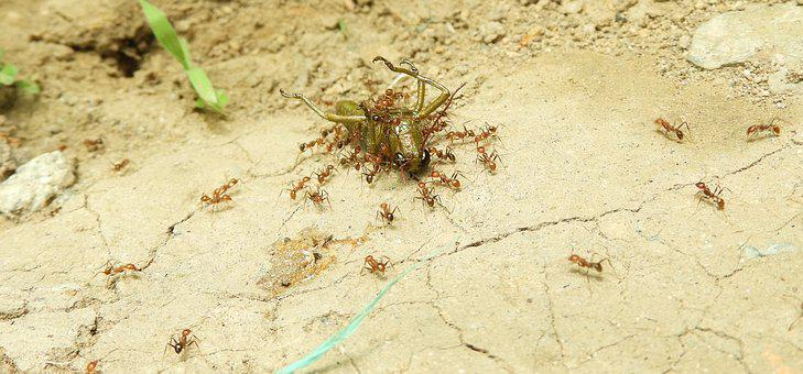 Insects, Work, Ants, Colombia