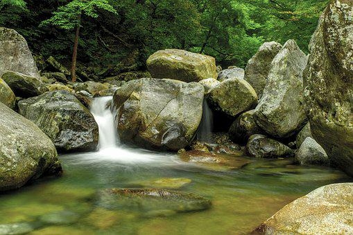 Jiri, Valley, Korea's Natural, Forest