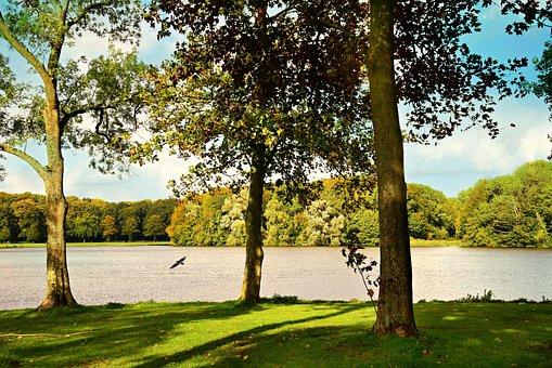 Tree, Lake, Landscape, Bird, Water, Shore, Scenic