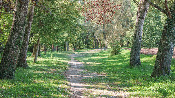Path, Forest, Trees, Landscape, Forests, Walk, Hiking