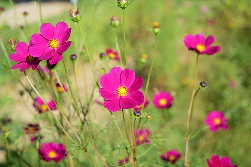 Flowers, Autumn, Plants, Wildflower, Nature, Mountain