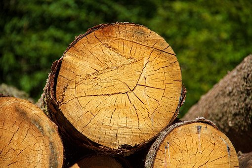 Wood, Log, Nature, Tree, Firewood, Forest, Holzstapel