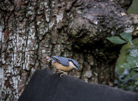 Nuthatch, Bird, Wildlife, Nature, Beak, Street, Feeding