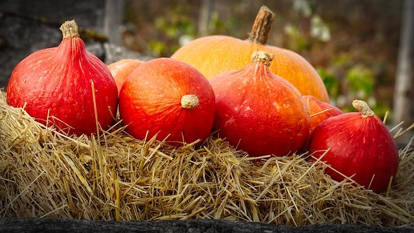 Pumpkins, Thanksgiving, Orange, Autumn