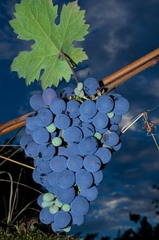 Purple Grapes, Grapes, Berries, Vine, Wine, Fruit
