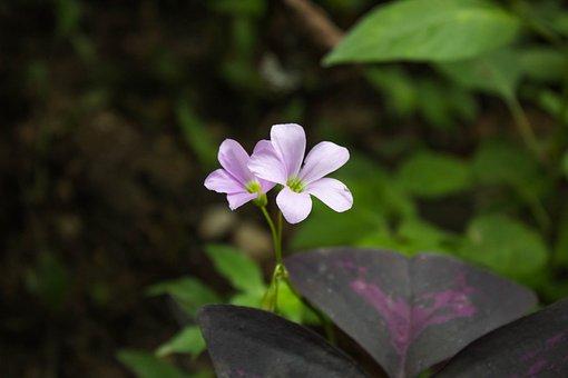 Garden, Flower, Pink, Floral, Flora, Rosa, Spring