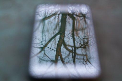 Smartphome, Tree, Abspiegelung, Closeup, Bokeh