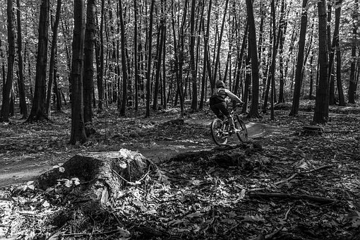 Sport, Bike, Enduro, Forest, Extreme, Biker, Nature