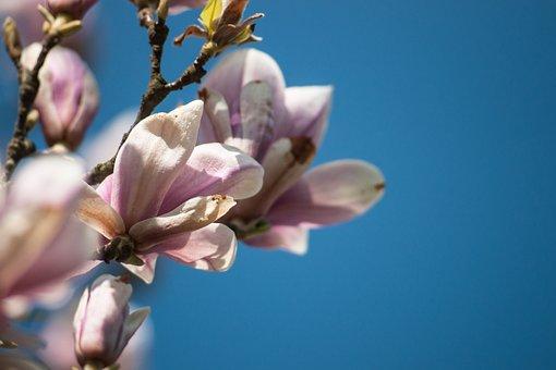 Spring, Nature, Plant, Close Up, Blossom, Bloom