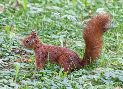 Squirrel, Animal, Nature, Cute, Rodent, Foraging