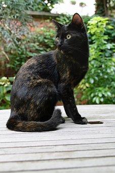 Cat, Domestic Cat, Tortoise Shell, Cat's Eyes, Pet