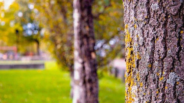 Tree, Nature, Landscape, Green, Wood, Mood, Evening