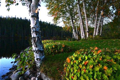 Landscape, Autumn, Nature, Trees, Birch, Forest, Lake