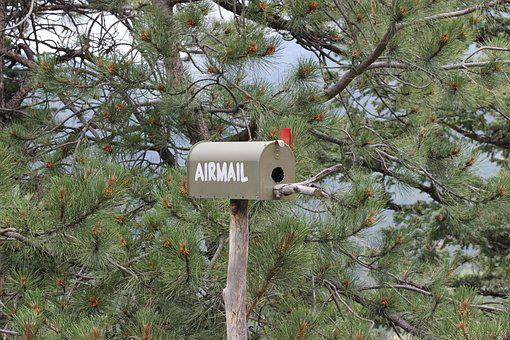 Airmail, Snail Mail, First Class, Trees, Forest, Mail