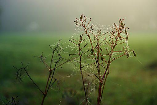Cobweb, Drip, Water, Green, Dew, Nature, Dewdrop