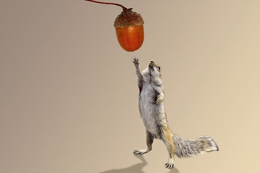 Squirrel, Acorn, Autumn, Rodent, Animal World, Brown