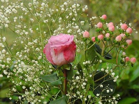 Rose, Autumn Rose, Hypericum, Gypsophila, Flora, Flower