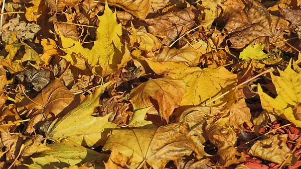 Leaves, Autumn, Yellow, Brown, Fall Foliage, Close Up
