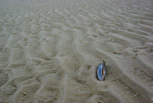 Ameland, Netherlands, Shell, Razor, Sea, Beach, Water
