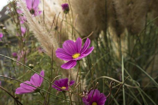 Flowers, Grässer, Beauty, Macro, Background, Meadow