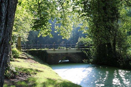 Glade, Forest, Sunbeam, Bridge