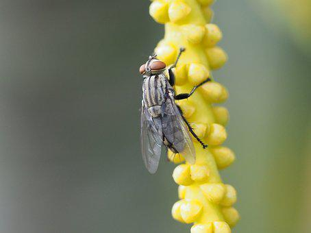 Fly, Insect, Macro, Bug, Bloom, Blossom, Yellow, Flower