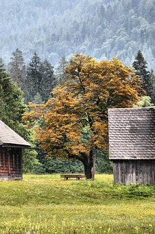 Autumn, Chestnut, Mountains, Hut, Bank, Fall Color, Fog