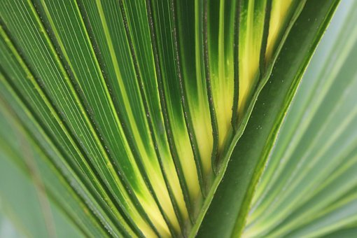 Palm Leaf, Green, Yellow, Lines, Diagonal, Pattern, Fan