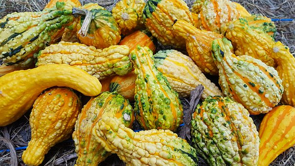 Ornamental Gourds, Gourds, Gourd, Fall, Yellow, Harvest