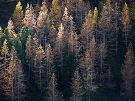 Larch, Sun, Nature, Landscape, Tree, Mountains, Fall